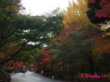 +++ りり☆Blog evolution +++ 広島在住OLの何かやらかしてる日記(・ω・)-20091115_104.jpg