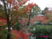 +++ りり☆Blog evolution +++ 広島在住OLの何かやらかしてる日記(・ω・)-20091115_107.jpg