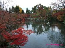 +++ りり☆Blog evolution +++ 広島在住OLの何かやらかしてる日記(・ω・)-20091115_123.jpg