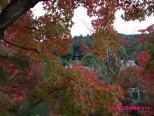 +++ りり☆Blog evolution +++ 広島在住OLの何かやらかしてる日記(・ω・)-20091115_127.jpg