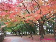 +++ りり☆Blog evolution +++ 広島在住OLの何かやらかしてる日記(・ω・)-20091115_089.jpg