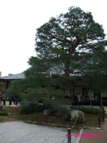 +++ りり☆Blog evolution +++ 広島在住OLの何かやらかしてる日記(・ω・)-20091116_084.jpg