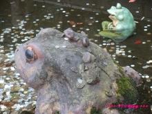 +++ りり☆Blog evolution +++ 広島在住OLの何かやらかしてる日記(・ω・)-20091116_099.jpg