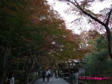 +++ りり☆Blog evolution +++ 広島在住OLの何かやらかしてる日記(・ω・)-20091116_102.jpg