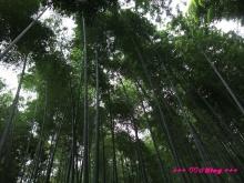 +++ りり☆Blog evolution +++ 広島在住OLの何かやらかしてる日記(・ω・)-20091116_109.jpg