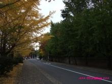 +++ りり☆Blog evolution +++ 広島在住OLの何かやらかしてる日記(・ω・)-20091116_176.jpg