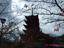 +++ りり☆Blog evolution +++ 広島在住OLの何かやらかしてる日記(・ω・)-20091121_031.jpg