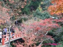 +++ りり☆Blog evolution +++ 広島在住OLの何かやらかしてる日記(・ω・)-20091121_043.jpg