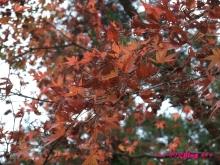 +++ りり☆Blog evolution +++ 広島在住OLの何かやらかしてる日記(・ω・)-20091121_045.jpg