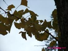 +++ りり☆Blog evolution +++ 広島在住OLの何かやらかしてる日記(・ω・)-20091121_046.jpg