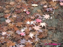 +++ りり☆Blog evolution +++ 広島在住OLの何かやらかしてる日記(・ω・)-20091121_050.jpg