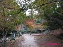 +++ りり☆Blog evolution +++ 広島在住OLの何かやらかしてる日記(・ω・)-20091121_054.jpg