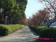 +++ りり☆Blog evolution +++ 広島在住OLの何かやらかしてる日記(・ω・)-20091123_087.jpg