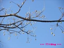 +++ りり☆Blog evolution +++ 広島在住OLの何かやらかしてる日記(・ω・)-20091123_088.jpg