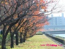 +++ りり☆Blog evolution +++ 広島在住OLの何かやらかしてる日記(・ω・)-20091123_092.jpg