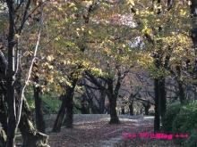 +++ りり☆Blog evolution +++ 広島在住OLの何かやらかしてる日記(・ω・)-20091123_137.jpg