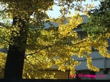 +++ りり☆Blog evolution +++ 広島在住OLの何かやらかしてる日記(・ω・)-20091123_145.jpg