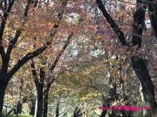 +++ りり☆Blog evolution +++ 広島在住OLの何かやらかしてる日記(・ω・)-20091123_146.jpg