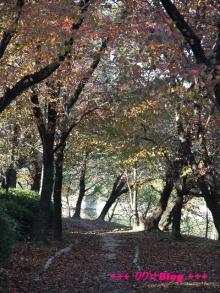 +++ りり☆Blog evolution +++ 広島在住OLの何かやらかしてる日記(・ω・)-20091123_147.jpg