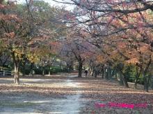 +++ りり☆Blog evolution +++ 広島在住OLの何かやらかしてる日記(・ω・)-20091123_150.jpg