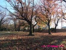 +++ りり☆Blog evolution +++ 広島在住OLの何かやらかしてる日記(・ω・)-20091123_151.jpg