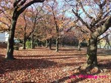+++ りり☆Blog evolution +++ 広島在住OLの何かやらかしてる日記(・ω・)-20091123_152.jpg