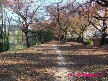 +++ りり☆Blog evolution +++ 広島在住OLの何かやらかしてる日記(・ω・)-20091123_153.jpg