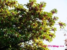 +++ りり☆Blog evolution +++ 広島在住OLの何かやらかしてる日記(・ω・)-20091128_032.jpg