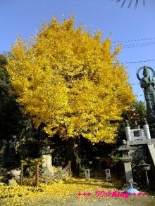+++ りり☆Blog evolution +++ 広島在住OLの何かやらかしてる日記(・ω・)-20091128_058.jpg