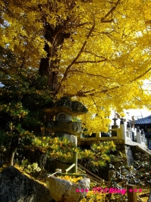 +++ りり☆Blog evolution +++ 広島在住OLの何かやらかしてる日記(・ω・)-20091128_067.jpg