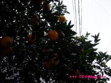 +++ りり☆Blog evolution +++ 広島在住OLの何かやらかしてる日記(・ω・)-20091212_006.jpg
