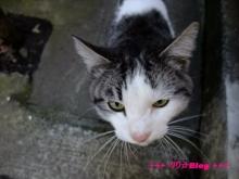 +++ りり☆Blog evolution +++ 広島在住OLの何かやらかしてる日記(・ω・)-20100103_046.jpg