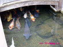 +++ りり☆Blog evolution +++ 広島在住OLの何かやらかしてる日記(・ω・)-20100103_137.jpg