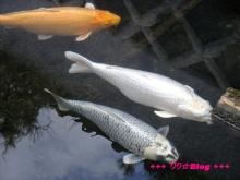 +++ りり☆Blog evolution +++ 広島在住OLの何かやらかしてる日記(・ω・)-20100103_142.jpg