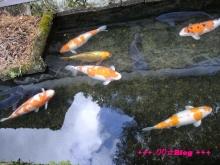 +++ りり☆Blog evolution +++ 広島在住OLの何かやらかしてる日記(・ω・)-20100103_145.jpg