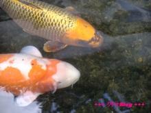 +++ りり☆Blog evolution +++ 広島在住OLの何かやらかしてる日記(・ω・)-20100103_147.jpg