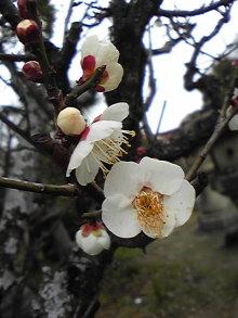 +++ りり☆Blog evolution +++ 広島在住OLの何かやらかしてる日記(・ω・)-DVC00154.jpg