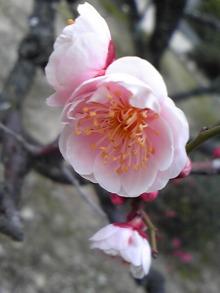 +++ りり☆Blog evolution +++ 広島在住OLの何かやらかしてる日記(・ω・)-DVC00157.jpg