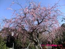 +++ りり☆Blog evolution +++ 広島在住OLの何かやらかしてる日記(・ω・)-20100221_012.jpg