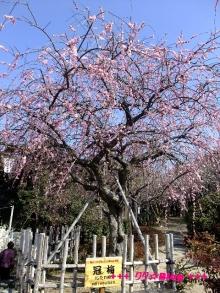 +++ りり☆Blog evolution +++ 広島在住OLの何かやらかしてる日記(・ω・)-20100221_013.jpg