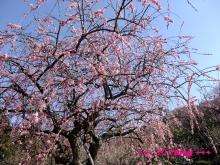 +++ りり☆Blog evolution +++ 広島在住OLの何かやらかしてる日記(・ω・)-20100221_014.jpg