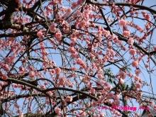 +++ りり☆Blog evolution +++ 広島在住OLの何かやらかしてる日記(・ω・)-20100221_015.jpg