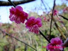 +++ りり☆Blog evolution +++ 広島在住OLの何かやらかしてる日記(・ω・)-20100221_016.jpg