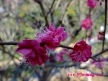 +++ りり☆Blog evolution +++ 広島在住OLの何かやらかしてる日記(・ω・)-20100221_017.jpg