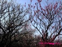 +++ りり☆Blog evolution +++ 広島在住OLの何かやらかしてる日記(・ω・)-20100221_018.jpg