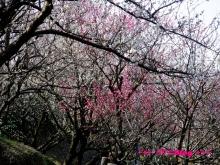 +++ りり☆Blog evolution +++ 広島在住OLの何かやらかしてる日記(・ω・)-20100221_020.jpg