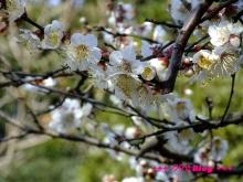 +++ りり☆Blog evolution +++ 広島在住OLの何かやらかしてる日記(・ω・)-20100221_019.jpg