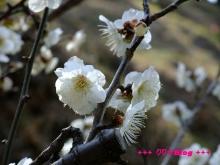 +++ りり☆Blog evolution +++ 広島在住OLの何かやらかしてる日記(・ω・)-20100221_024.jpg