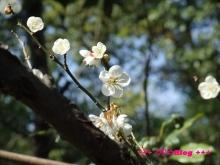 +++ りり☆Blog evolution +++ 広島在住OLの何かやらかしてる日記(・ω・)-20100221_026.jpg