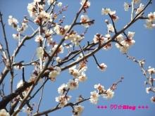 +++ りり☆Blog evolution +++ 広島在住OLの何かやらかしてる日記(・ω・)-20100221_037.jpg